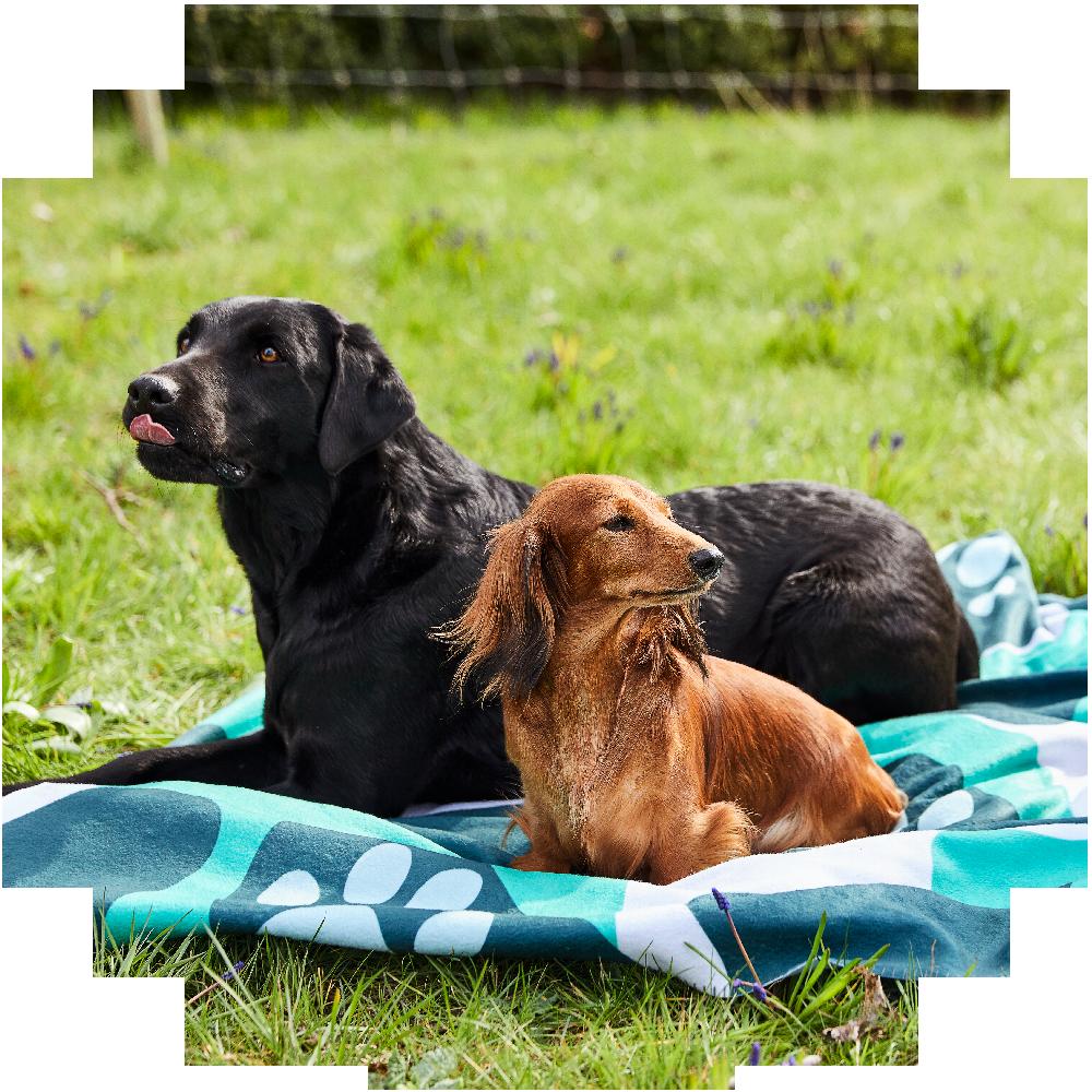Hundar_hundprobiotika